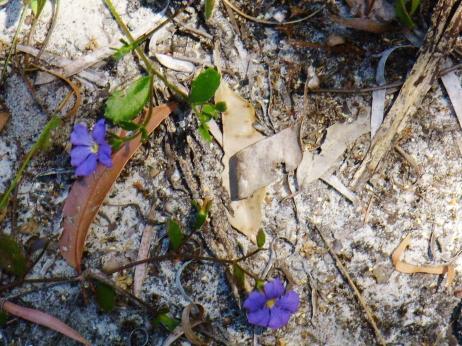 Wildflowers Goode Beach