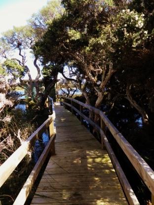 Walkway Bird Hide Lake Vancouver
