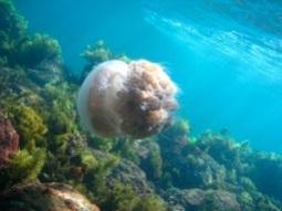 Marine life Frenchman Bay