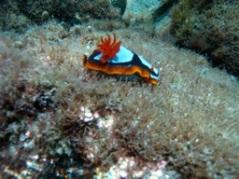 Frenchman Bay Marine Life