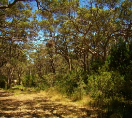 Karri Forest Goode Beach