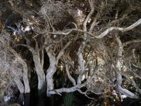 Bird Hide Surrounding Trees