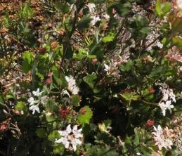 Southern Cross plant