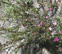Wildflowers Frenchman Bay