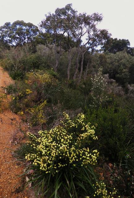 Walk trail Frenchman Bay area