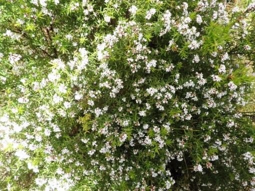 Wildflowers Torndirrup