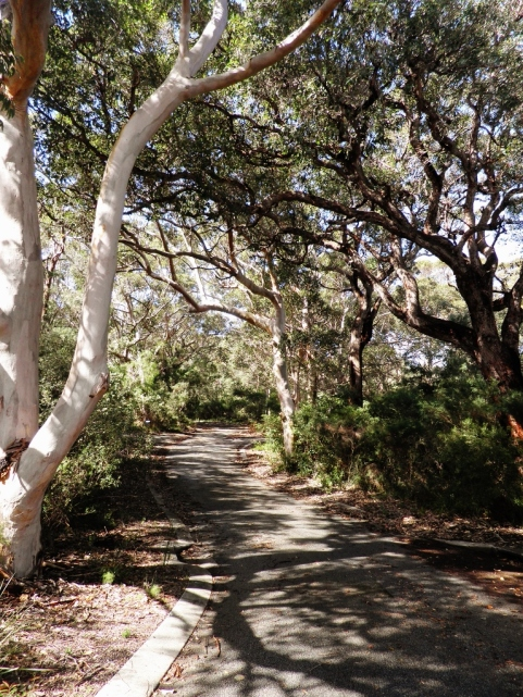 Karri Forest walk